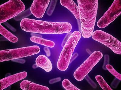 Bakterie e. Coli w zbliżeniu