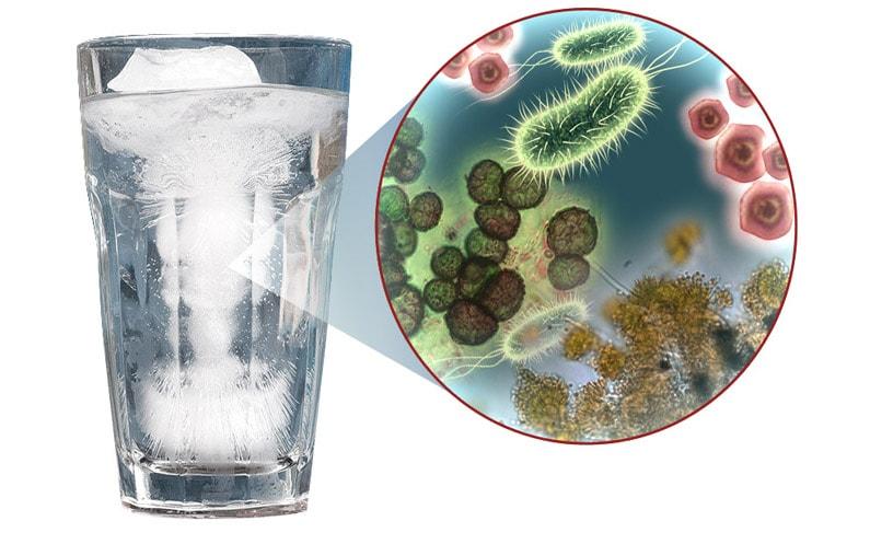 Odmiany bakterii występujących w wodzie