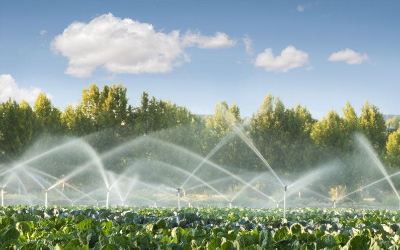 Woda dla roślin, czyli jak uzdatniać wodę w ogrodnictwie?