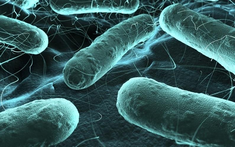 Lampy bakteriobójcze – co warto wiedzieć przed zakupem?
