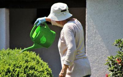 Czy wodą po zmiękczaczu wody można podlewać rośliny?